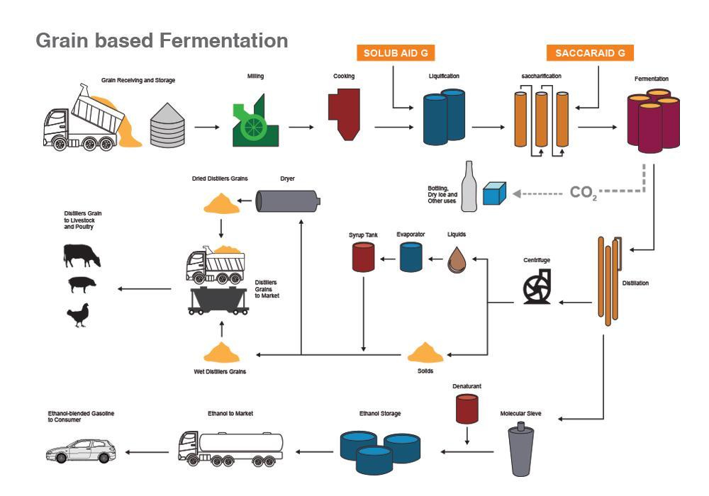 Grain based Fermentation