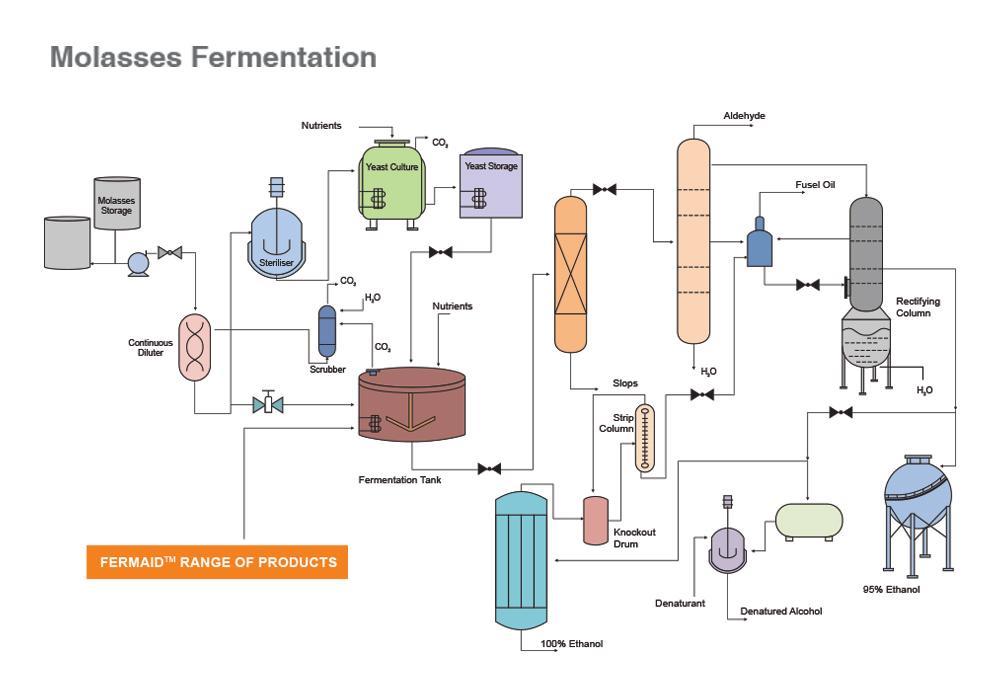 Molasses Fermentation